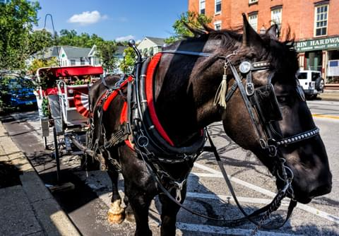 a horse and carriage in chagrin falls