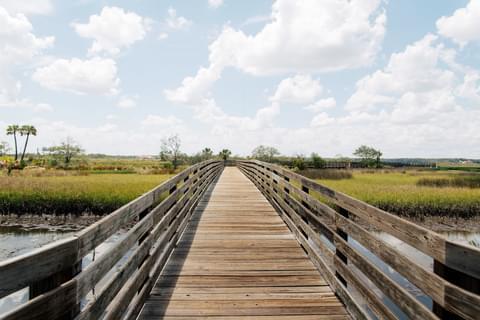 marsh-lands.jpg
