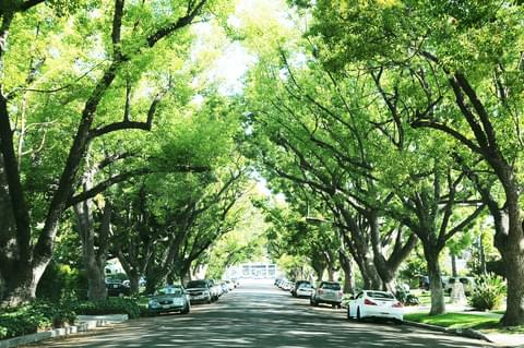 Tree-Lined Streets,