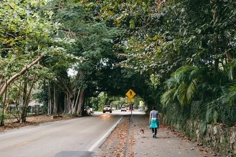 Greenery in Coconut Grove,