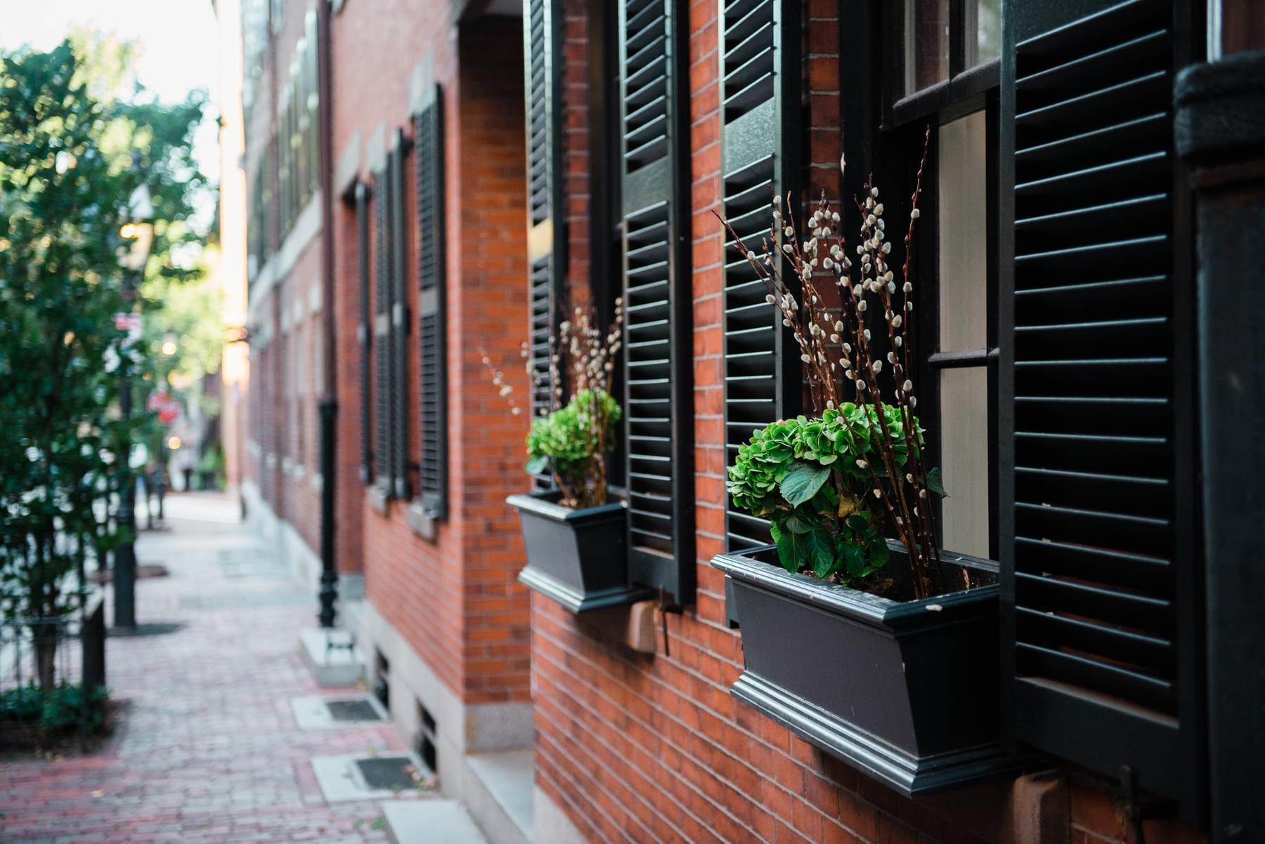 Image of plants on a sidewalk & Apartments and Houses for Rent | Doorsteps.com