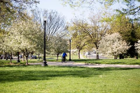 Petworth's Parks,